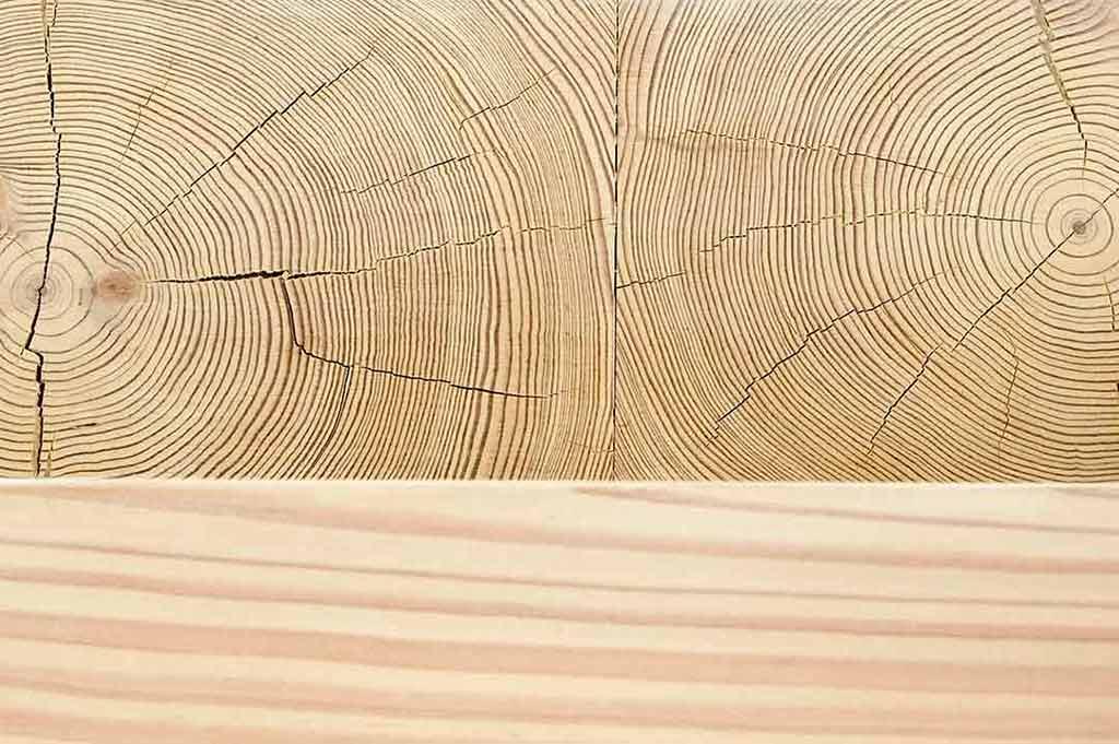 corte trasversal de pino